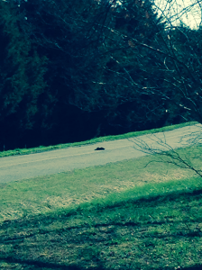 deadgroundhog